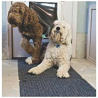 Doggy Doormat